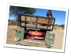 'Game' meat in a land rover near, N/a'ankuse Wildlife Sanctuary, Windhoek, Namibia