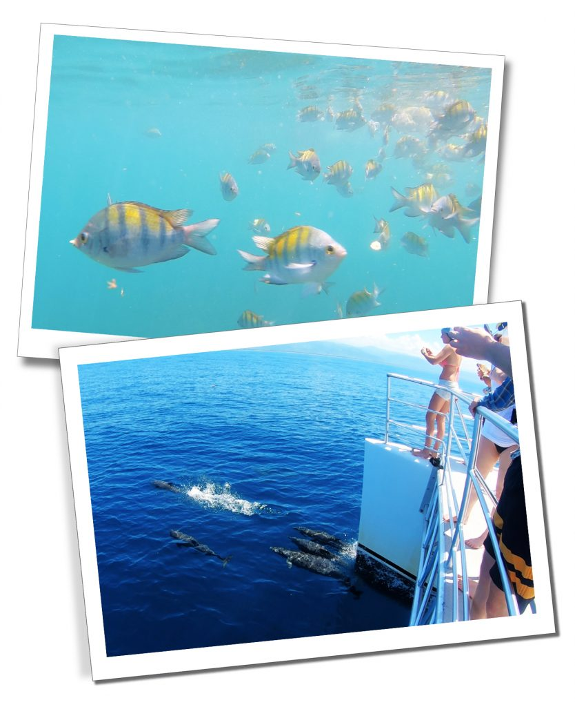 Quepos to San Jose Catamaran Cruise including Dolphins, rays and schools of tropical fish
