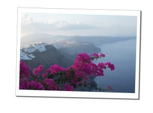 Rhododendron trees, over Santorini Bay