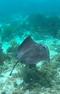 Sting Ray, Coral Gardens