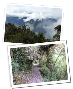The Trail through the trees and in the clouds, Inca Trail, Peru.