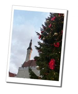 The giant Christmas tree covered in fairy lights, by the Town Hall, Tallinn, Estonia
