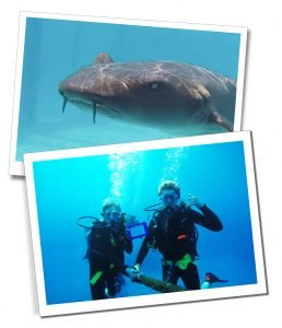 An underwater photo of a shark and SueWherewhywhat & friend Scuba diving