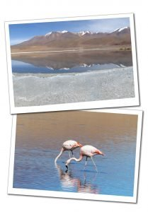 2 Pink Flamingoes, one with its head underwater, in the water at Laguna Canapa, Bolivia