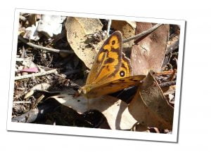 A butterfly sits in the sunshine on fallen leaves