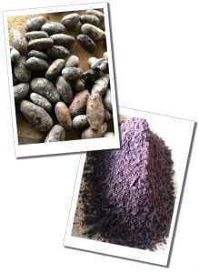 Cacao in it's raw bean form and once ground