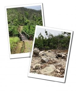 Hiking trail, Cold-Soufriere, Dominica