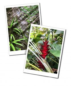 Flora and forna at Syndicate Parrot reserve, Dominican hiking, national parks, Caribbean