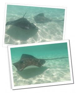 Sting Rays, Stingray City, Grand Cayman, 20 Best Things To Do In Antigua - A Local Perspective