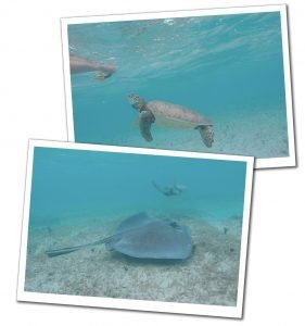 Underwater pictures of Turtles being fed, Farmers Cay, Bahamas