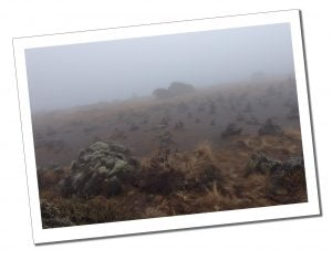 Eery path past Cathedral Point in the mist on Day 3, Mount Kilimanjaro