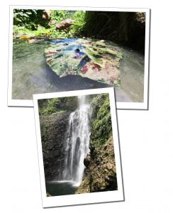 Giant floating leaf at Hot Springs & waterfall, Dominica