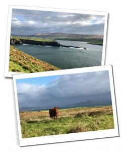 The sea and a lone highland cow in the wilds of The Ring of Kerry - Ring of Kerry Itinerary