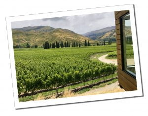 The green of the vineyard at The Gibbston Valley in the Central Otago area, New Zealand