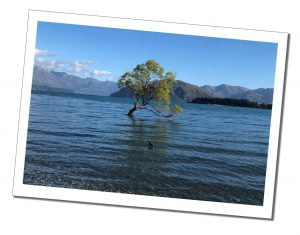A picture of 'That Wanaka Tree' alone in the water at Wanaka, New Zealand