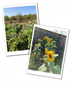 Kitchen Garden - Ultimate Guide to Planning Your Perfect Hampton Court Day Trip