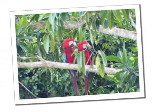 Macaw, 10 Essential Things to Know before Visiting the Amazon in Peru