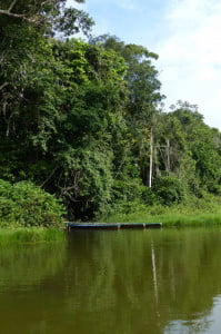 10 Essential Things to Know before Visiting the Amazon in Peru