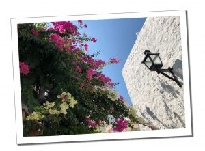 Flowers and white walls of Plaka, Milos
