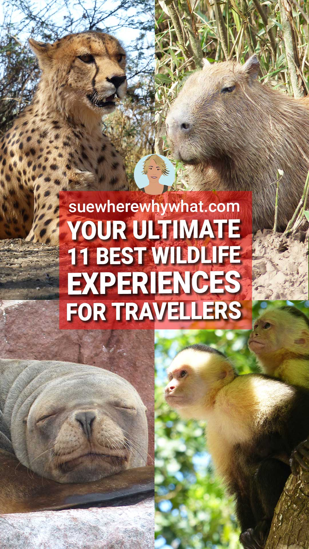 Top 11 Wildlife Experiences in the World
